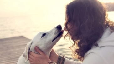 """Picture of a dog licking owner in order to answer """"Does my dog love me?"""""""