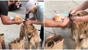 Golden retriever stealing buns from stranger