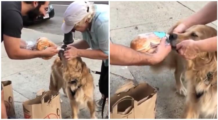 Golden retriever stealing buns from stranger