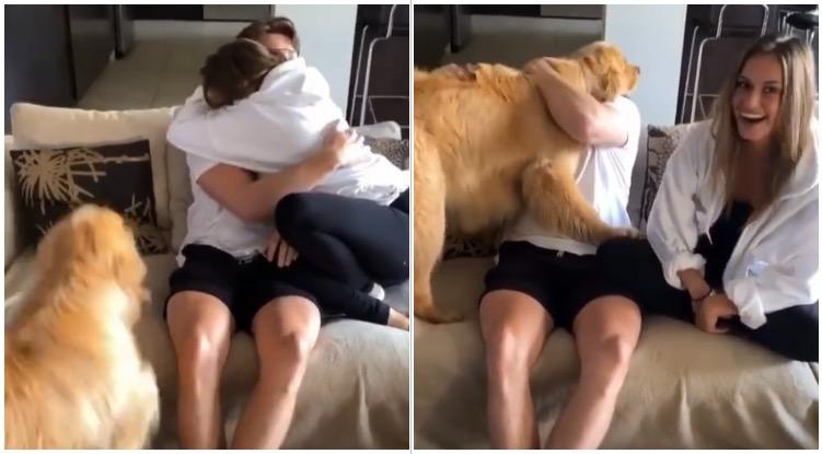 Jealous Golden Retriever hugging his owner in front of girlfriend