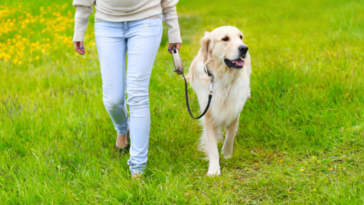 stop your dog from pulling his leash