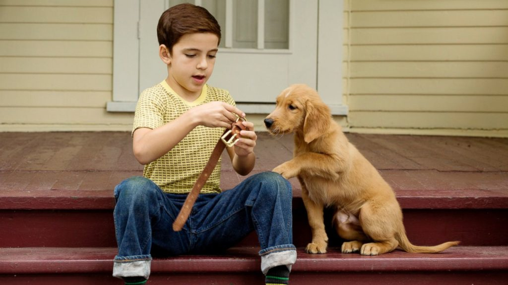 Image is there to show a scene from the movie A dogs purpose (A dog's purpose)