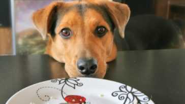 stop your dog from begging for food