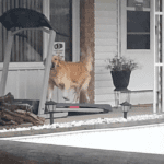 Dog Running Gym