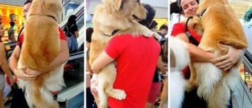 the owner carries a golden retriever in the mall