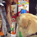 Dog's first time picking a toy