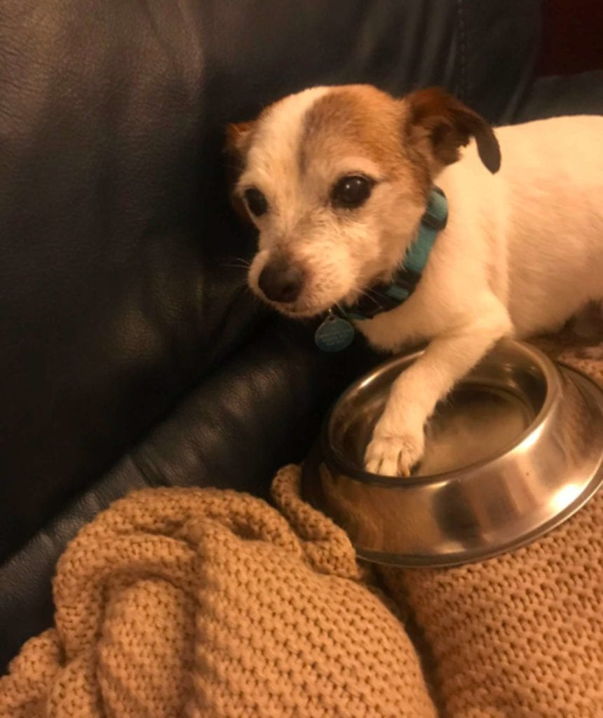 A rescue dog named Neville and his bowl