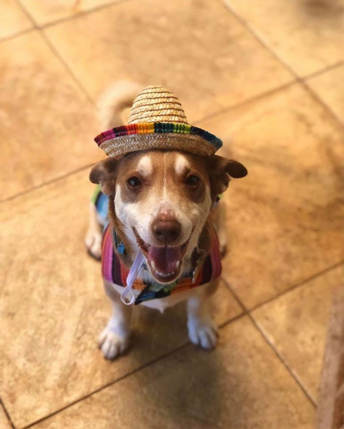 13-year-old senior dog named Bailey
