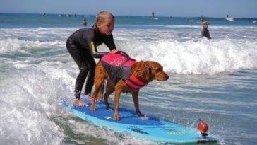 Golden retriever teaching disabled children to surf