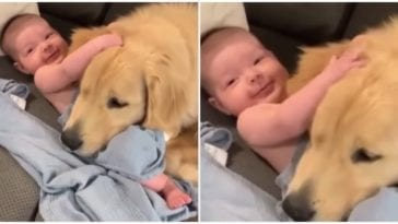 Newborn baby snuggling up with golden retriever