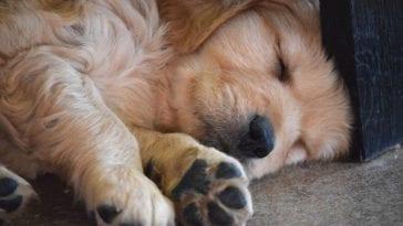 How Many Hours Of Sleep Do Dogs Need