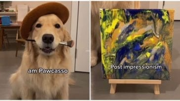 Golden retriever painting a picture with the help of a zip-bag and peanut butter