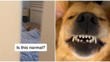 Dog owner shocked after seeing how his dog likes to sleep