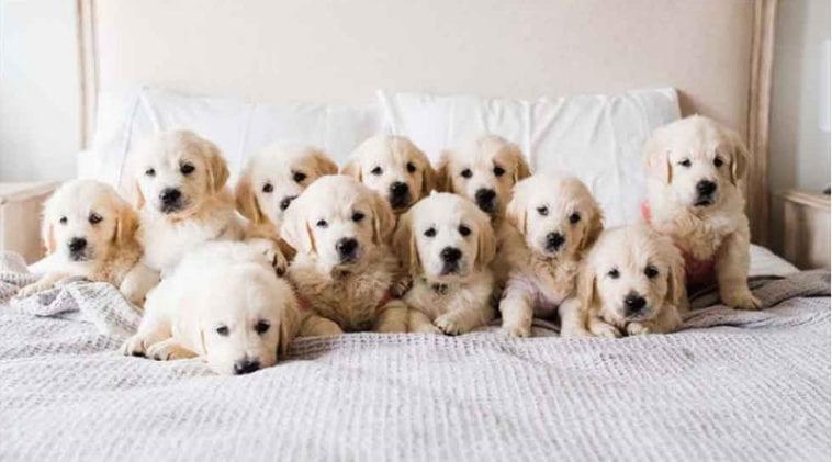 cute famous goldens on instagram