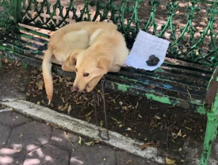 golden retriever left alone on the bench