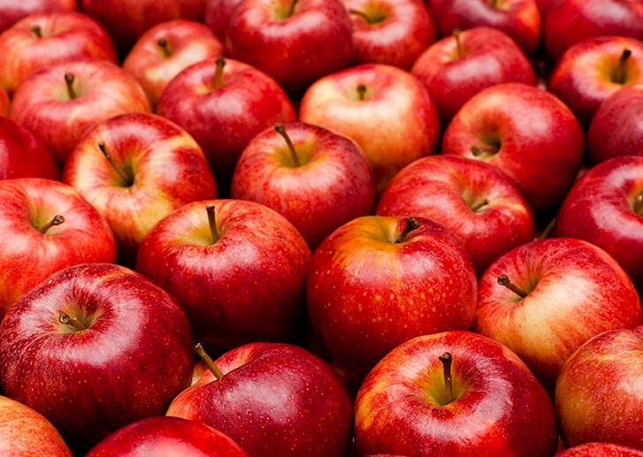 What fruits can dogs eat - apples are one of those fruits that are safe for dogs to eat
