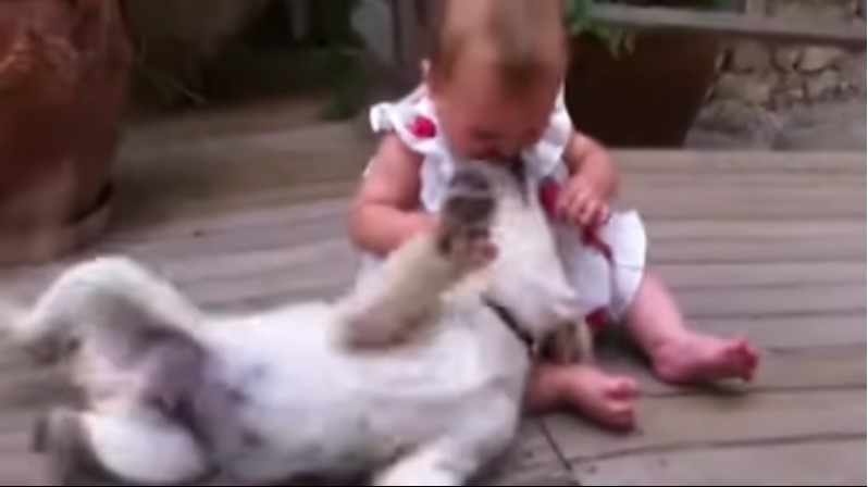 baby reunited with golden puppy