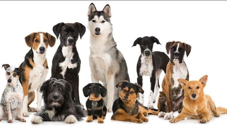 the most popular dog breeds