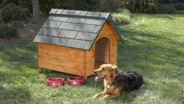 Picture of a dog house in order to explain how to build a dog house