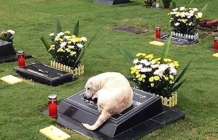 Dog on his owner's grave, picture shows that we must love dogs and protect them, because they are truly are our best friends