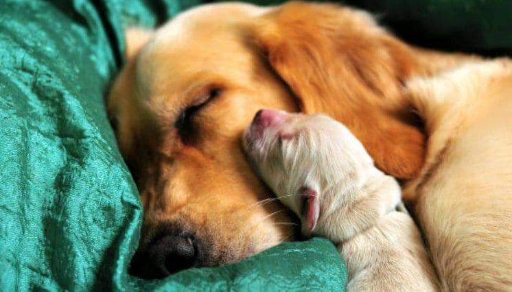 Image of dog and puppy in order to answer the question how long are dogs pregnant