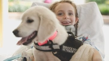 paralyzed girl and service dog