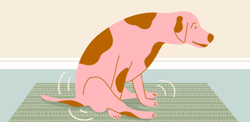 How do you know if your dog needs glands expressed?