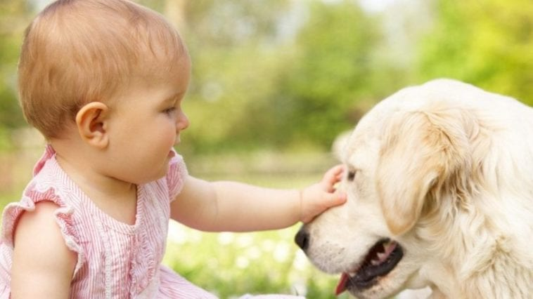 Golden retriever dog and baby