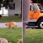golden retriever loves to say hi to a garbage man