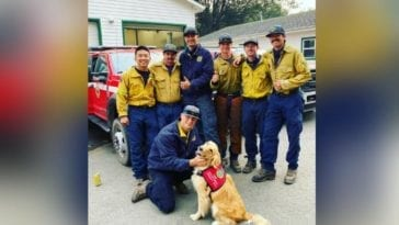Golden retriever with firefighters