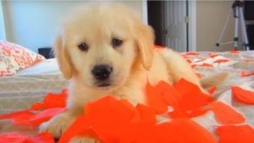 cute puppy celebrating 1st birthday