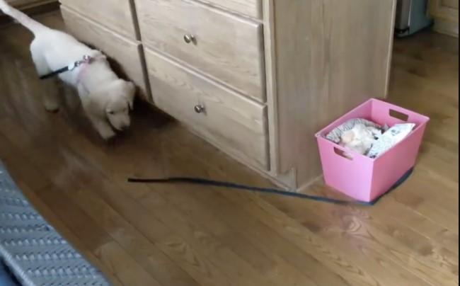 puppy chasing a leash