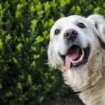 Do Dogs Smile
