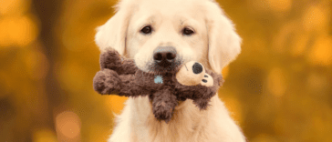 golden retriever stealing toys from police station