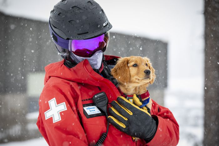 puppy rescuing at mountain