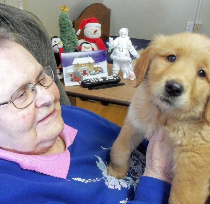 golden retriever puppy in a nursing home