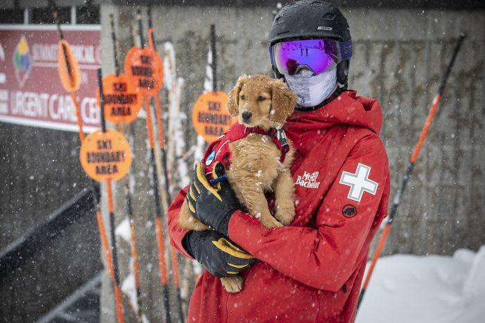 puppy training rescue