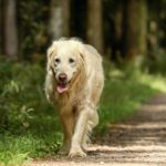 What Is Cushing's Disease In Dogs
