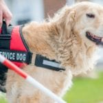 Pictures a service dog in order to answer how to get a service dog?