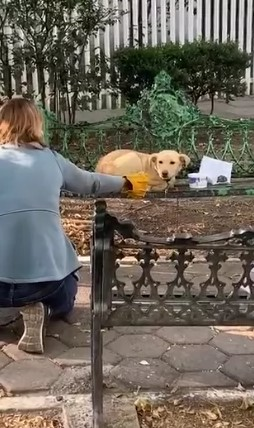 woman trying to save abandoned golden retriever
