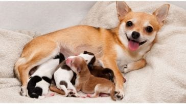 A female canine with her kids how many puppies can a dog have