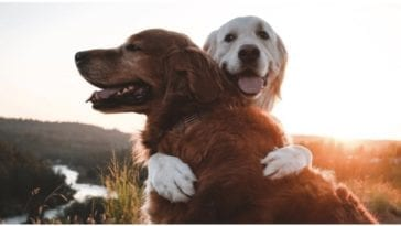 Two dogs hugging each other while their owner wonders do dogs have souls
