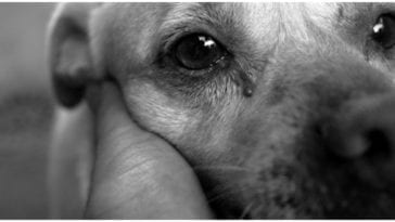 A dog owner staring into the eyes of his canine wondering do dogs see in black and white