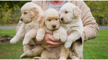 When is national puppy day and how to celebrate it