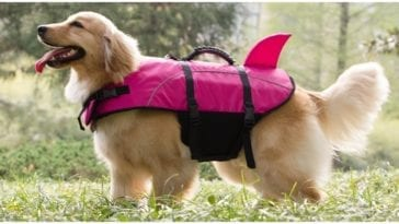 A smiling golden retriever wearing a dog life jacket