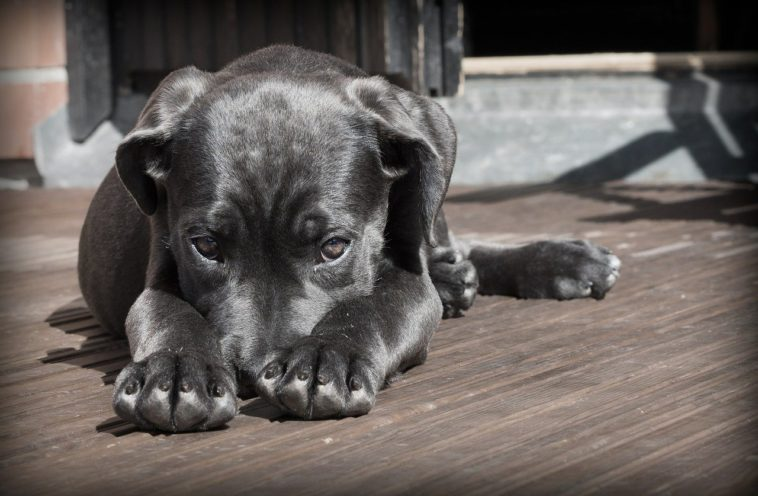 What Causes Hot Spots On Dogs