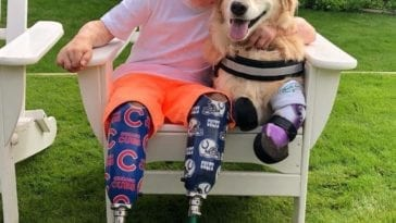 boy with amputee legs met a golden retriever with amputee legs