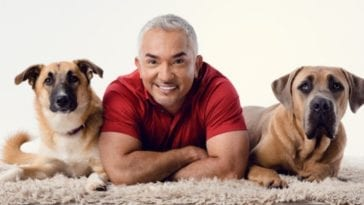 cesar millan with two dogs