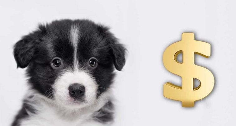 Illustration to answer how much does a dog cost