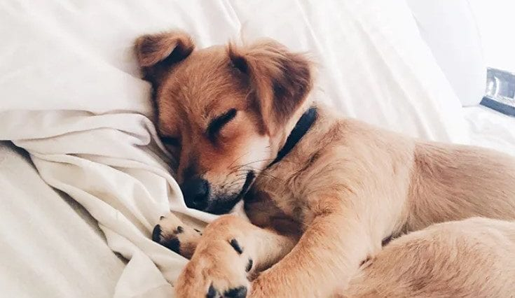Dog sleeping in order to answer how many hours a day do dogs sleep
